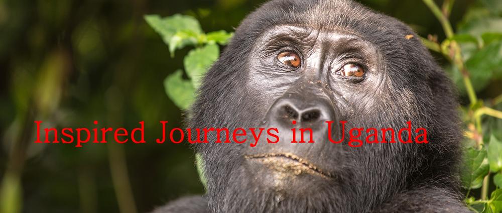 Inspired Journeys in Uganda , East Africa
